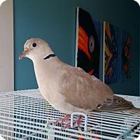 Adopt A Pet :: Grace - Hightstown, NJ