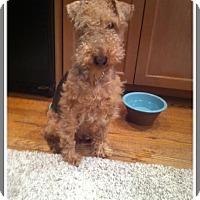 Adopt A Pet :: Bob (COURTESY POST) - Baltimore, MD