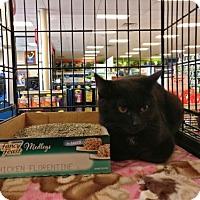 Adopt A Pet :: Mae - Avon, OH