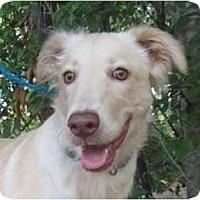 Adopt A Pet :: Gracy - Kingwood, TX