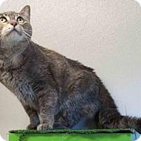 Adopt A Pet :: Karma - Colorado Springs, CO