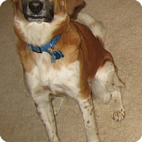 Adopt A Pet :: Libbie  -Courtesy Listing - Richmond, VA