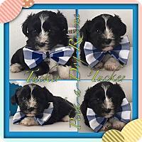 Adopt A Pet :: Tucker - South Gate, CA