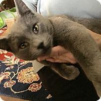 Adopt A Pet :: Panther - Colmar, PA