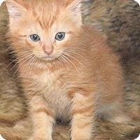 Adopt A Pet :: Clark - Reston, VA