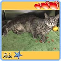 Adopt A Pet :: Rolo - Harrisburg, NC