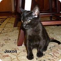 Adopt A Pet :: Jaxon - Portland, OR