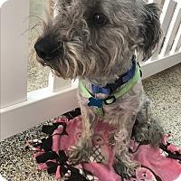 Adopt A Pet :: Courage - Thousand Oaks, CA