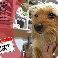 Adopt A Pet :: Johnny Cash - Fort Worth, TX
