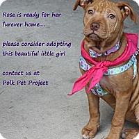 Adopt A Pet :: Rose - Winter Haven, FL