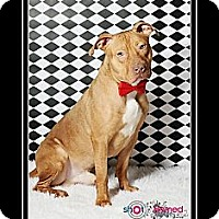 Adopt A Pet :: Red - Hilliard, OH