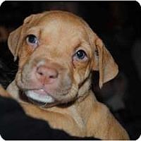 Adopt A Pet :: String bean - Orlando, FL