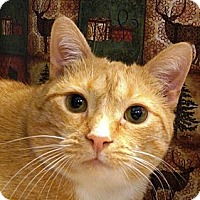 Adopt A Pet :: Cajun Cate - Albany, NY