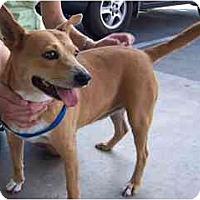 Adopt A Pet :: Dora - Scottsdale, AZ
