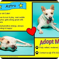 Adopt A Pet :: Astro - El Campo, TX