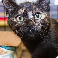 Adopt A Pet :: Carrie - Irvine, CA