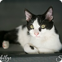 Adopt A Pet :: Shamus - Columbia, TN