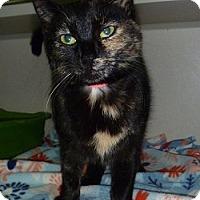 Adopt A Pet :: Mabel - Hamburg, NY