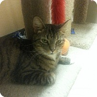 Adopt A Pet :: Pretty Boy - West Dundee, IL