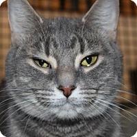 Adopt A Pet :: Patrice - Hamilton, ON