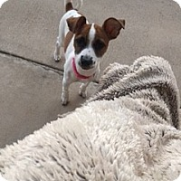 Adopt A Pet :: Louise in Dallas PENDING - Dallas/Ft. Worth, TX