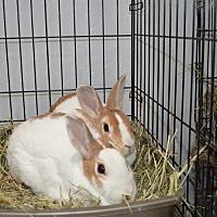 Dutch for adoption in Erie, Pennsylvania - Merry