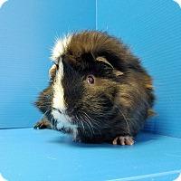Adopt A Pet :: Sammy Hagar - Lewisville, TX