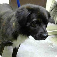 Adopt A Pet :: URGENT AT BIG BEAR - San Bernardino, CA