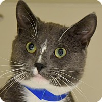 Adopt A Pet :: Smokey - Fairport, NY