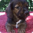 Adopt A Pet :: Sissy