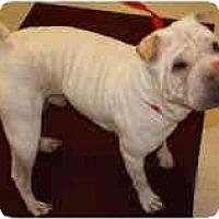 Adopt A Pet :: Rebel - Bethesda, MD