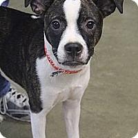 Adopt A Pet :: Izabelle - Wytheville, VA
