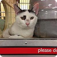 Adopt A Pet :: Whispurr - Monroe, GA