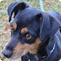 Adopt A Pet :: Kinso - Erwin, TN