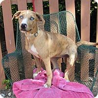 Adopt A Pet :: Gypsy - Oakland, AR
