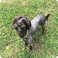 Adopt A Pet :: Reggie - Marlton, NJ