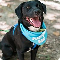 Adopt A Pet :: Dexter - Huntsville, AL