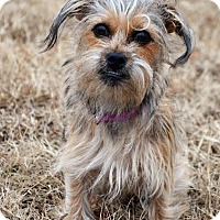 Adopt A Pet :: *Annie - PENDING - Westport, CT
