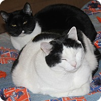 Adopt A Pet :: Yin - Boise, ID