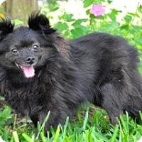 Adopt A Pet :: Lulu - conroe, TX