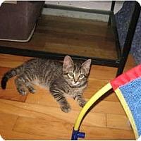 Adopt A Pet :: Thomas - Portland, ME