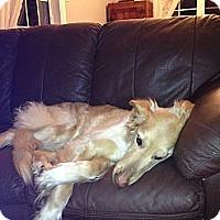 Adopt A Pet :: Mandy - Rigaud, QC