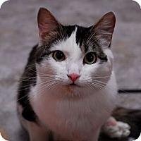 Adopt A Pet :: Amanda - Lunenburg, MA