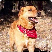 Adopt A Pet :: Spirit - Scottsdale, AZ