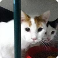 Adopt A Pet :: Whipper - Hamilton, ON