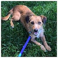 Adopt A Pet :: Elliot - West LA, CA