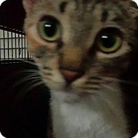 Adopt A Pet :: Camilla - Chandler, AZ