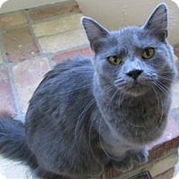 Domestic Mediumhair Cat for adoption in Buhl, Idaho - Mae