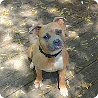Adopt A Pet :: Molly - Reisterstown, MD