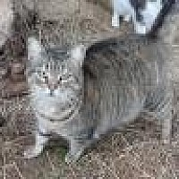Adopt A Pet :: Leddie - Stuart, VA
